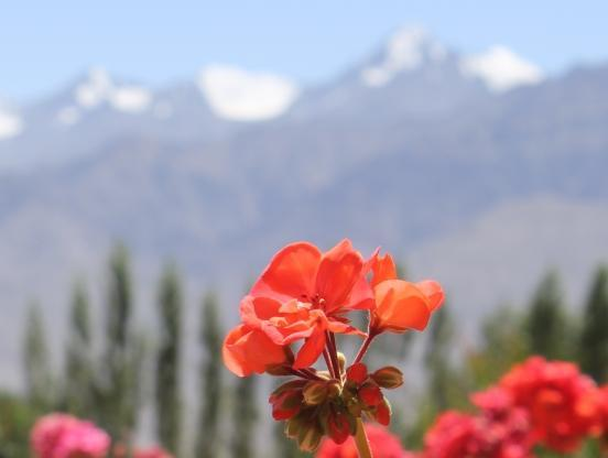 Ladakh Chris James Travel